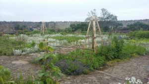 Walled Garden Lindisfarne